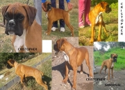 Cachorro macho 100 europeo