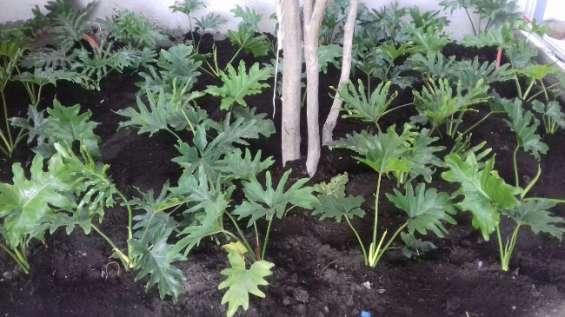 Jardineria xochimilco