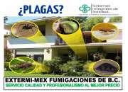 FUMIGACIONES EN TIJUANA EN CASAS $ 450.00 MN