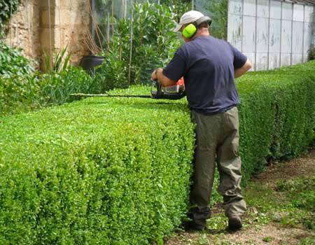 Fotos de Servicios jardinería 6