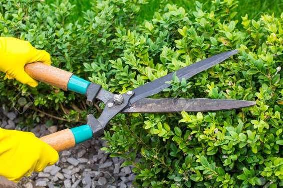 Fotos de Servicios jardinería 7
