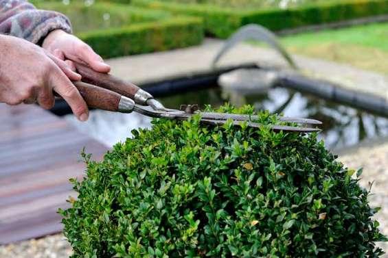 Fotos de Servicios jardinería 2